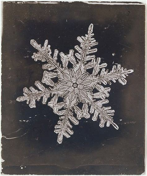 snowflake bentley museum wilson alwyn bentley american 1865 1931 snow crystal