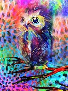 colorful owls colorful owl wijze uilen editor owl and i am