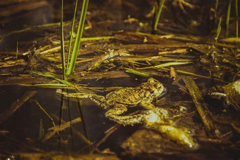 Rana Hijau Daun gambar air alam hutan menanam daun danau basah