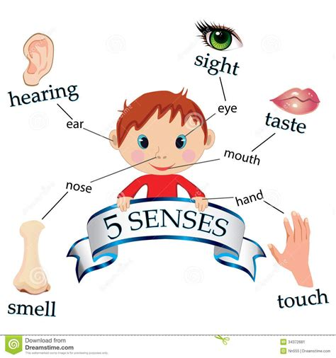Image result for human body and 5 senses cartoon images