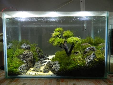 jual aquascape  lapak ads shop aquarium gobye