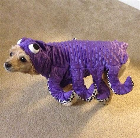 25 pet halloween costumes that are so cute we cant even 25 pet halloween costumes that are so cute we can t even