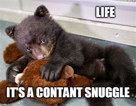 Snuggle Bear Meme - and constant snuggle imgflip