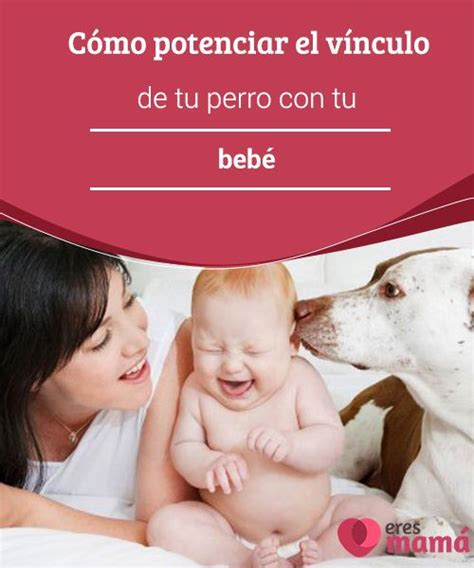 el vnculo afectivo con 8479537507 c 243 mo potenciar el v 237 nculo de tu perro con tu beb 233 bb