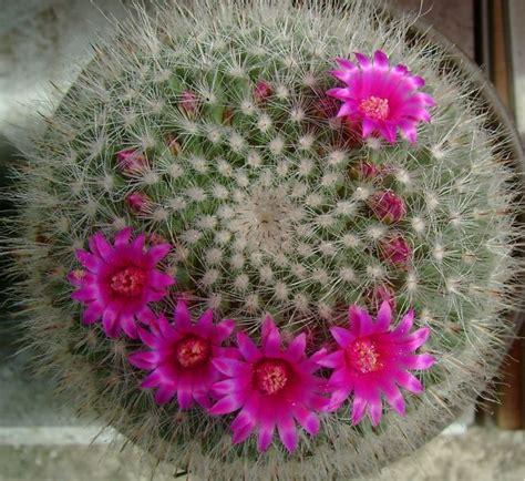 imagenes de flores invernales flores invernales