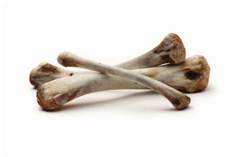 can dogs steak bones harmful food for dogs the saturday evening post