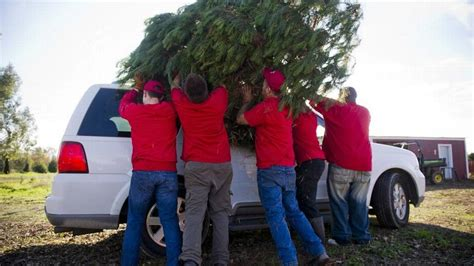 christmas tree farms in sacramento norcal tree farms in sacramento foothills the sacramento bee
