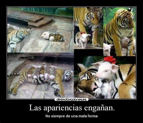 imagenes de tigres kawaii im 225 genes y carteles de tigres pag 13 desmotivaciones