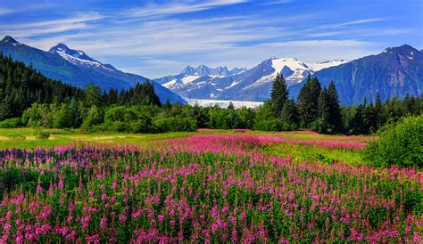 best way to visit alaska alaska escape the heat for your summer vacation