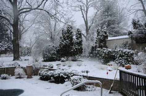 giardino invernale giardino invernale tipi di giardini