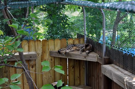 backyard cat enclosure how to create a safe outdoor cat enclosure or catio for