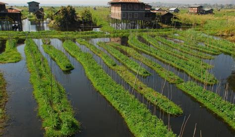 Resource Gardening Preserving Our Water Resources Lessons From Inle Lake Iucn