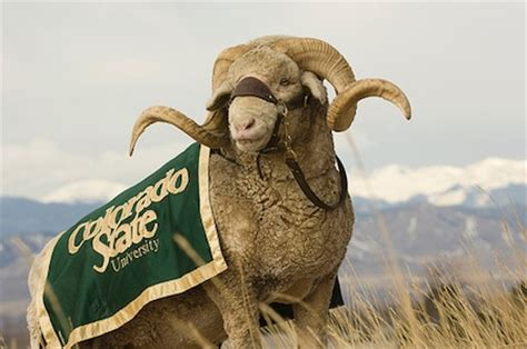 total pro sports   real animal mascots  college