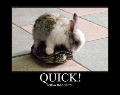 Funny Rabbit Memes - rabbit ramblings bunny meme day