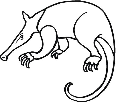 aardvark coloring page coloring pages coloring pages