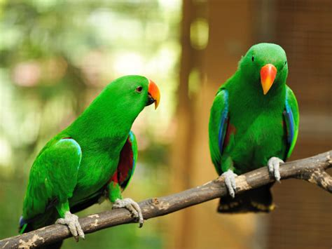 how to care for parrots boldsky com