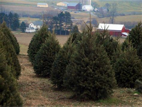 valley view christmas tree farm