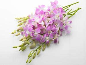 conservazione fiori recisi come conservare i fiori in cera russelmobley