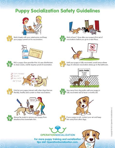 puppy socialization 1000 images about lili chin infographics on barking puppy school and