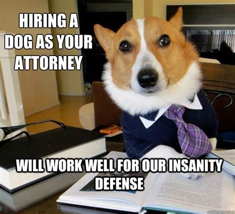 Funny Lawyer Memes - best of the lawyer dog meme 20 pics pleated jeans
