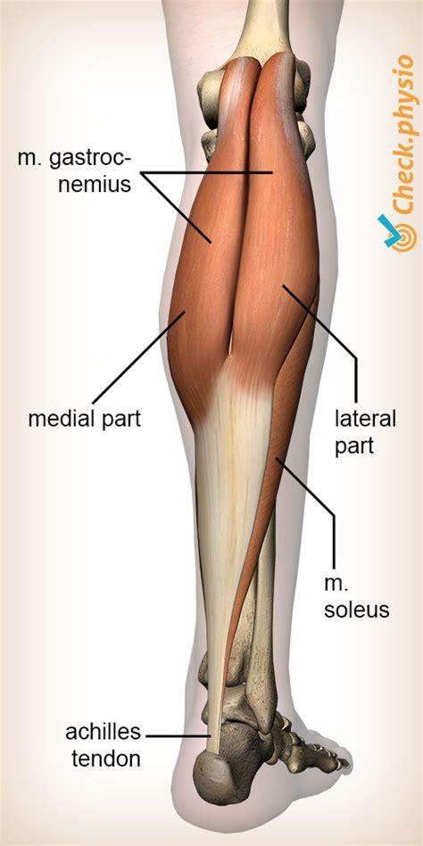 freehand calf muscle skin tear calf muscle tear physio check