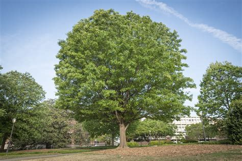 a tree earth day is a great day to appreciate trees clemson news and stories south carolina