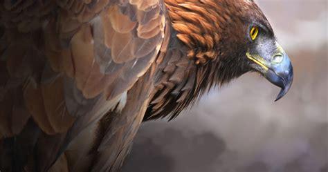 eagles  ultra hd wallpapers top  eagles  ultra