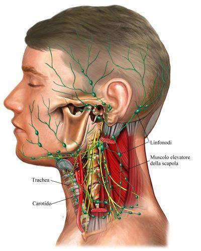 gengiva interna gonfia rinitis al 233 rgica estacional o perenne sintomas y tratamiento