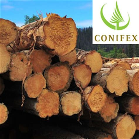 lumber supplier canfor loans  million  conifex