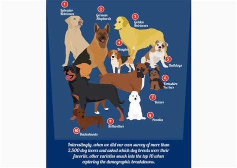 popular breeds in usa most popular breeds in the united states by region