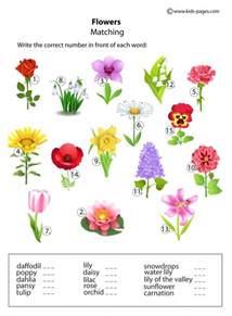 flower worksheet for kindergarten flower counting