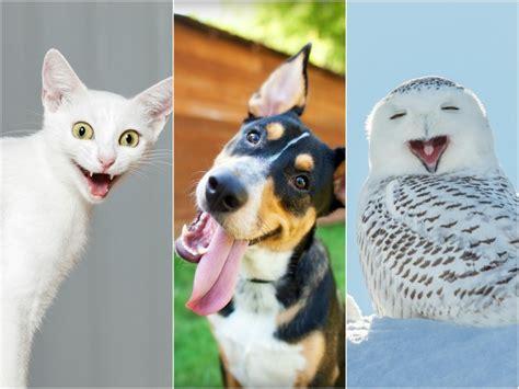imágenes muy graciosas de animales im 225 genes graciosas de animales y mascotas todo mascotas