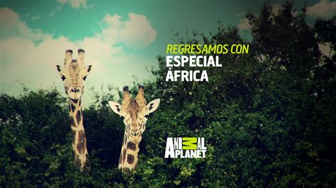 animal planter mu design animal planet latam
