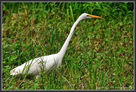 ocala central florida beyond birds of central florida