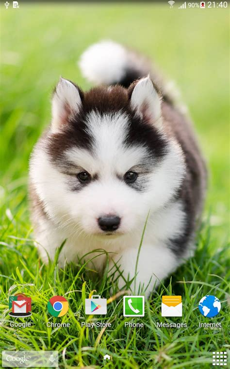 cute puppy android wallpapers for free cute puppies live wallpaper android apps on google play