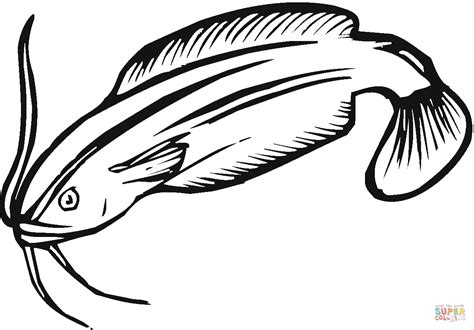 catfish coloring page catfish 18 coloring page free printable coloring pages