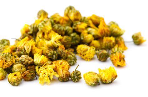 fiore della camomilla fiore secco della camomilla immagine stock libera da
