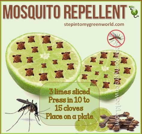 natural backyard mosquito control backyard mosquito control diy crafts
