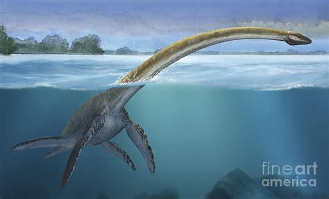Duvet Cover Wikipedia A Elasmosaurus Platyurus Swims Freely Digital Art By