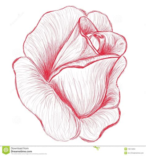 Red rose bud hand drawn illustration stock images image 19574264