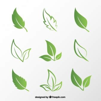 leaf vectors photos and psd files free download