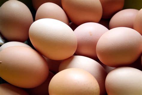 eggsperiment csa eggs vs organic store bought eggs groovy green livin
