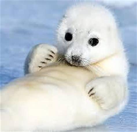 polar region animals | surprisinganimals
