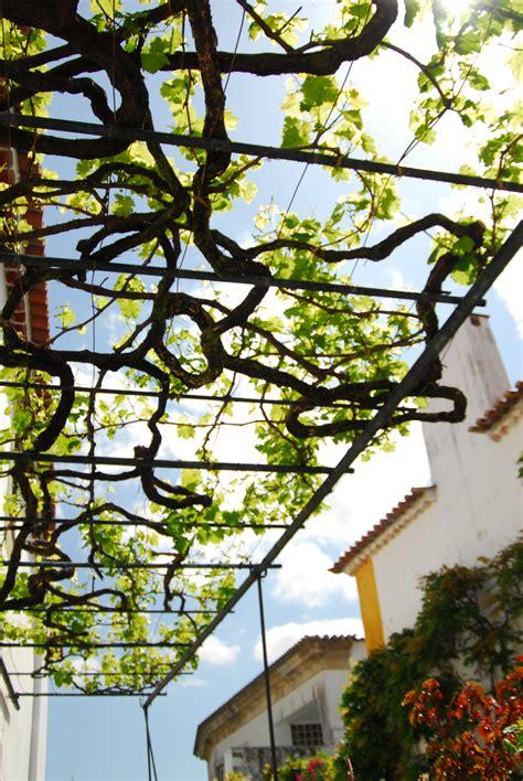Grape Vine Trellis For Sale File Overhead Grapevine Arbor Trellising Jpg