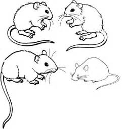 mouse colors free printable mouse coloring pages for