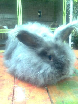 Lop Karakter Kelinci kelinci