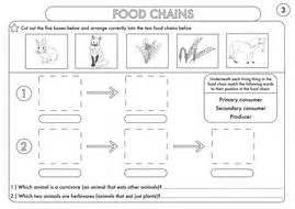 food chain worksheet pdf year 4 science animals including humans digestion