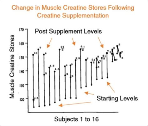 creatine for you how creatine helps you gain and strength