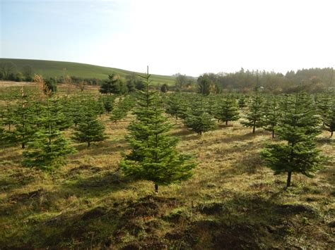 gallery of christmas tree farms in salem oregon perfect