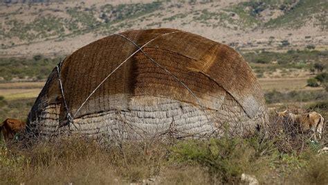 hutte nomade aqal hutte nomade en somalie